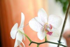 Le neckless sur la fleur Photos libres de droits
