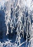le Neige-gel a couvert le branchement du bouleau Image libre de droits