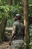 Leśniczy w lesie tropi szympansy Gombe Zdjęcia Royalty Free