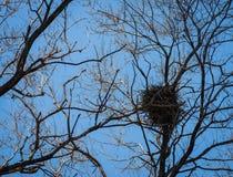 Le nid de corneille. Photo libre de droits
