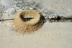 Le nid de fourmi Photo libre de droits