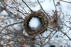 Le nid de l'oiseau Photos stock