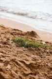 Le nid de l'oiseau dans le sable par la mer photographie stock libre de droits