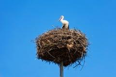 Le nid de l'oiseau de cigogne sur la colonne Photos stock
