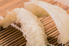 Le nid de l'oiseau en bambou sur Photographie stock