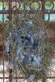 Le nid de l'oiseau vide est fixé aux grilles images libres de droits