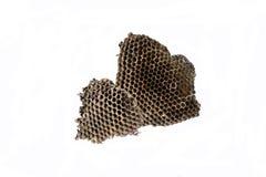 Le nid des guêpes avec du miel dans les cellules de nid d'abeilles Isolat sur le fond blanc Images stock