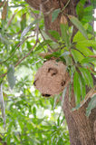 Le nid du frelon Photo stock