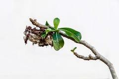 Le nid du frelon. Images stock