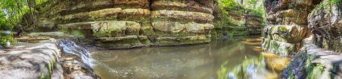Le nid du vanneau photo libre de droits