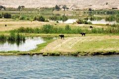 Le Nil photo libre de droits
