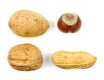 Le noci delle nocciole delle mandorle si inverdiscono le noci su un fondo bianco Immagine Stock Libera da Diritti