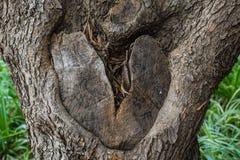 Le noeud dans le tronc d'arbre a formé comme un coeur brisé Images stock