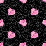 le noir fleurit l'orchidée Photographie stock