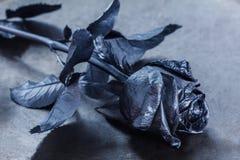 Le noir a monté Concept, symbole de l'humeur de peine, mélancolique et triste Photo libre de droits