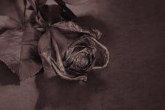 Le noir a monté Concept, symbole de l'humeur de peine, mélancolique et triste Photos libres de droits