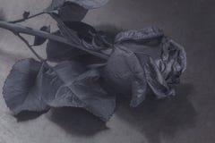 Le noir a monté Concept, symbole de l'humeur de peine, mélancolique et triste Photographie stock