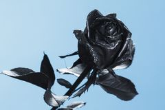 Le noir a monté Concept, symbole de l'humeur de peine, mélancolique et triste Image stock