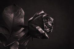 Le noir a monté Concept, symbole de l'humeur de peine, mélancolique et triste Images libres de droits