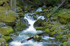 Le nord cascade la crique Photographie stock