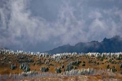 Le nord cascade le paysage scénique de parc national Photos stock