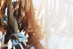 Le Norvégien a séché des poissons sur le dessiccateur avec le fond clair de fuite photos stock