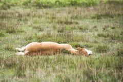 Le nouveau poulain de Forest Pony fixe image stock
