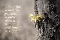Le nouveau vert laisse l'élevage du vieux tronc d'arbre avec le message Photos stock