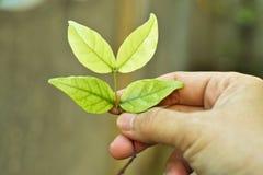 Le nouveau vert part sur la main de femme, soin pendant la nouvelle vie Images stock