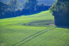 Le nouvel hiver cultive la représentation dans les terres cultivables près de Crowhurst, le Sussex est, Angleterre images stock