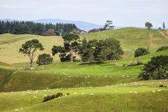 Le Nouvelle-Zélande pendant l'été Image libre de droits