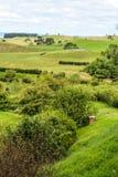 Le Nouvelle-Zélande pendant l'été Photo stock