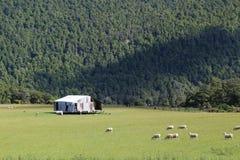 Le Nouvelle-Zélande solitaire Shack Photographie stock libre de droits