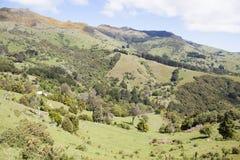 Le Nouvelle-Zélande et x27 ; campagne de s Photos libres de droits