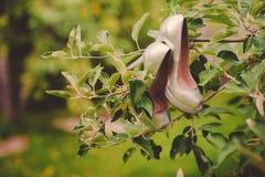 Le nozze calzano l'attaccatura su un albero nel parco Immagine Stock Libera da Diritti