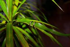 Le nozze dell'oro due sono una foglia verde Fotografie Stock Libere da Diritti