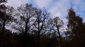 Le nubi nel cielo le siluette degli alberi Immagini Stock Libere da Diritti