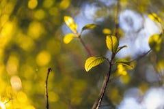 Le nuove foglie sui precedenti dell'albero incorona Fotografia Stock