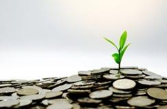 Le nuove foglie verdi piantano la crescita nelle monete di risparmio immagine stock
