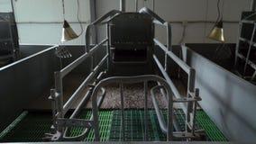 Le nuove penne pulite vuote nella stanza di maternità sono sull'azienda agricola industriale moderna dell'maiale-allevamento, vis stock footage