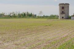 Le nuove piantagioni stanno venendo Fotografie Stock