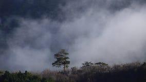 Le nuvole circolano sull'albero solo video d archivio