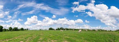 le nuvole panoramiche del cielo blu con il campo verde abbelliscono per backgr Fotografia Stock Libera da Diritti