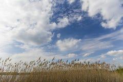 Le nuvole piacevoli sul cielo ed asciugano l'alta erba Fotografia Stock Libera da Diritti