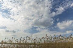 Le nuvole piacevoli sul cielo ed asciugano l'alta erba Immagini Stock