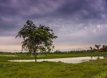 Le nuvole pronte per pioggia Immagine Stock