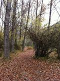 leśny bujny obrazy stock