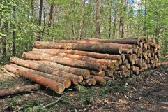 leśny drewna fotografia royalty free