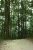 leśny obraz Obraz Stock