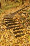 leśny schody Zdjęcie Royalty Free